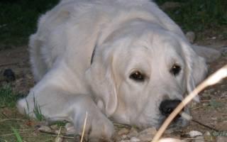 Открытки с изображением собак. Поздравления с днем рождения любителям собак