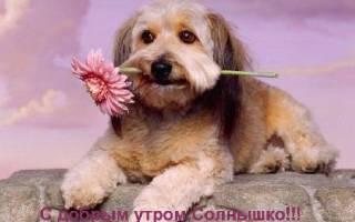 Приятное пожелание доброго утра девушке. Пожелания с добрым утром любимой девушке