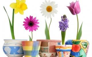 Поздравление на 8 марта воспитателям от родителей