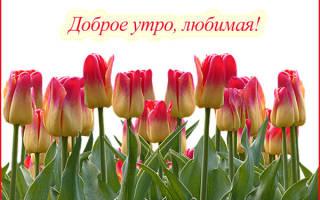 Романтичное доброе утро девушке. Красивые смс пожелания с добрым утром любимой девушке, женщине в прозе. Красиво поздравь мужчину с добрым утром