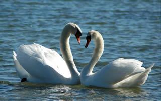 Красивые и прикольные поздравления с днем всех влюбленных в прозе. Пожелания ко дню Святого Валентина в прозе — поздравления своими словами