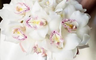 Красивые розы для любимой девушке. Красивые цветы (55 фото c пожеланиями для любимых)