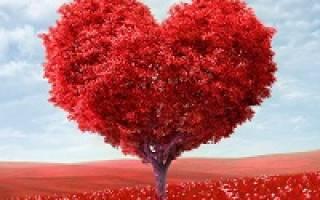 Поздравления с днем святого Валентина любимому, мужу, другу. Короткие поздравления с днем святого валентина мужу в стихах
