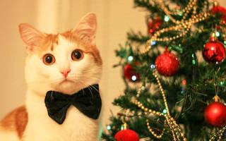 Новогодние поздравления для мужчины прощальные. Теплое поздравление с новым годом. Красивое поздравление с новым годом